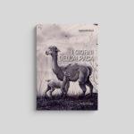 I giorni dell'alpaca