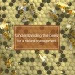 Understanding the bees
